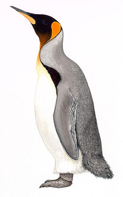 Penguins drawing - photo#45