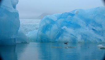 Obama Permanently Protects Large Areas of Arctic and Atlantic ...