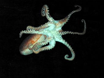 Names Of Ocean Decomposers | www.pixshark.com - Images ...