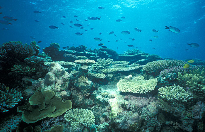 coral reefs houses diverse community of species Coral reefs are some of the most diverse ecosystems in the world, housing tens of thousands of marine species about one-third of all marine fish species live part of.