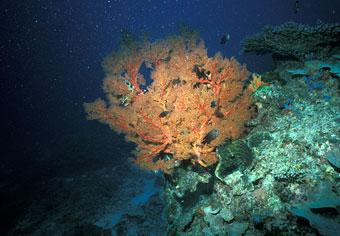 Coral Reef: Great Barrier Reef