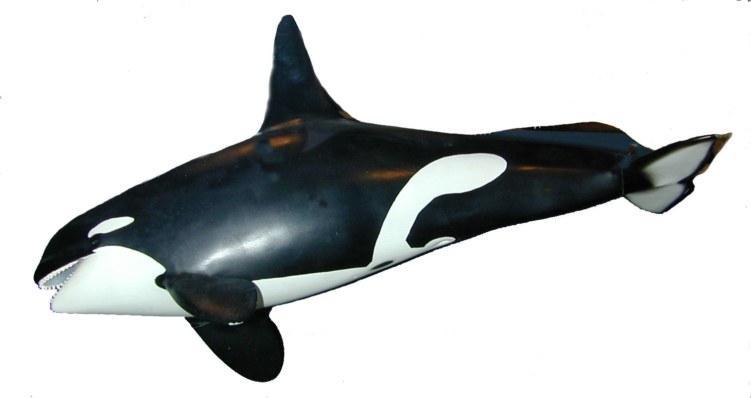 KillerWhales: Body Form