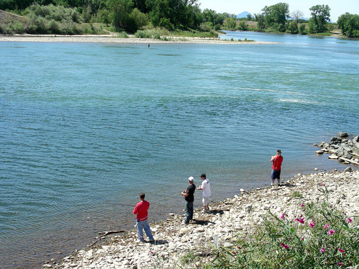 Mariculture salmon and steelhead for Feather river salmon fishing