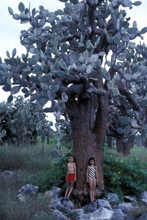 Tree Cactus And Children