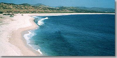 Beach The Sandy